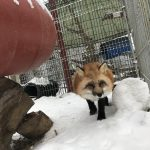 Only Pawsitive Solutions - Renard