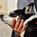 préparer l'arrivée de votre chien adopté en refuge