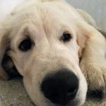 Only Pawsitive Solutions - Puppy eyes