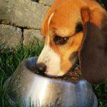 Non à la gamelle (nourrir son chien intelligemment)