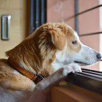 L'anxiété de separation chez le chien